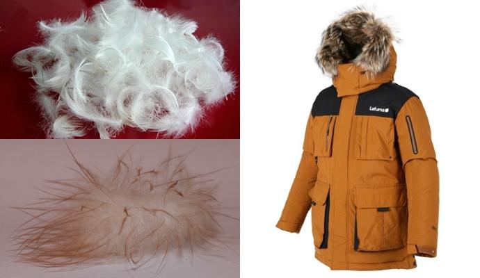 (왼쪽) 아우터 충전재로 쓰이는 오리의 깃털(위)과 솜털(아래)ⓒwikimedia.org, (오른쪽) 방풍성과 투습성이 보완된 원단의 최신 아우터ⓒLafuma