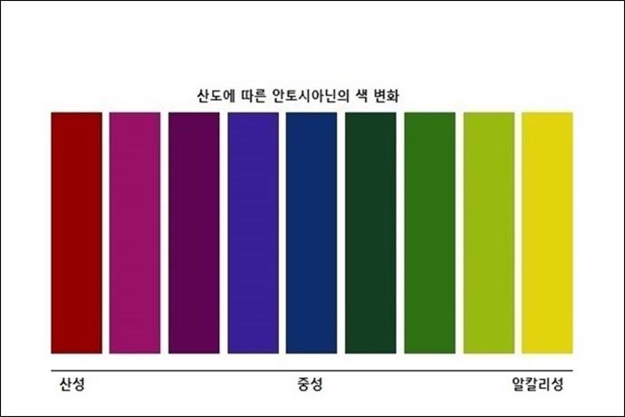 산도에 따른 안토시아닌의 색 변화 표