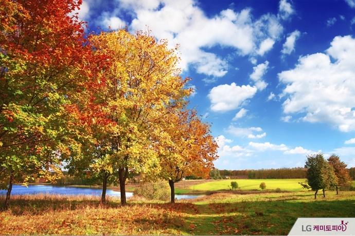 여러색깔의 단풍나무