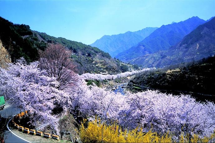 화계 십리 벚꽃길 전경