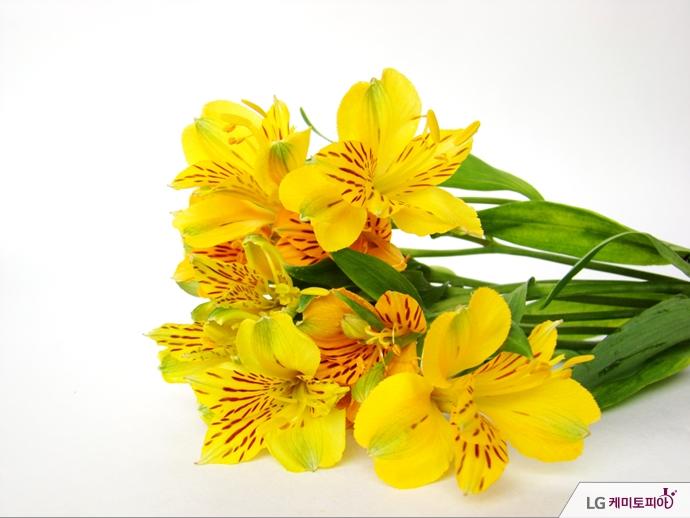 노란색 알스트로메리아 꽃다발