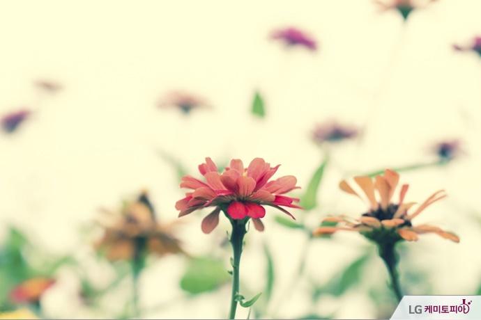 아름다운 여러 색깔 꽃