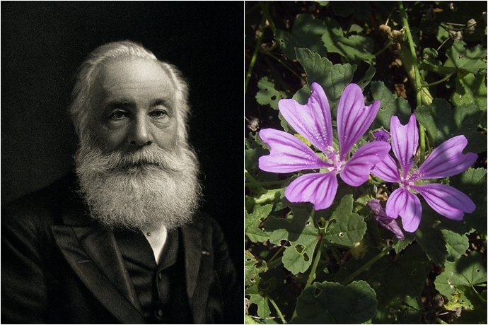 (좌) 윌리엄 퍼킨, (우) 모브 명칭의 유래가 된 보라색 꽃