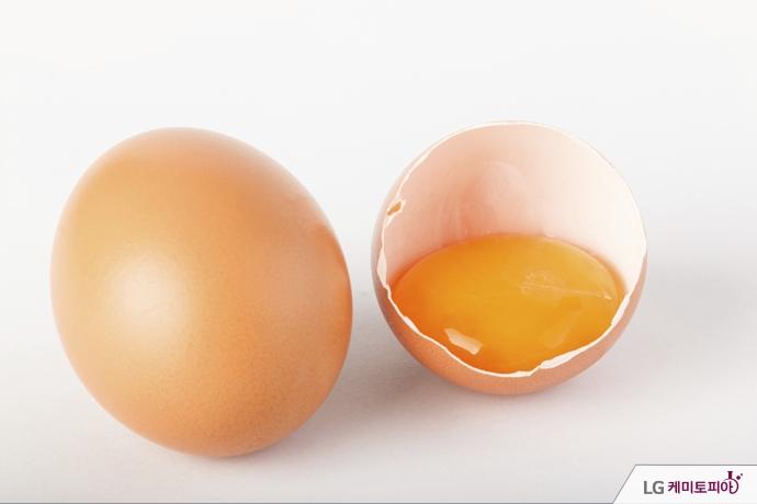 템페라에 이용된 계란 노른자