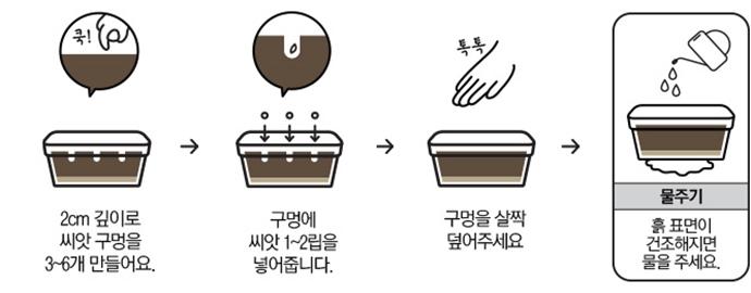 2 cm 깊이로 씨앗 구멍을 3~6 개 만들어요 → 구멍에 씨앗 1~2 립을 넣어줍니다 → 구멍을 살짝 덮어주세요 → 물주기: 흙 표면이 건조해지면 물을 주세요