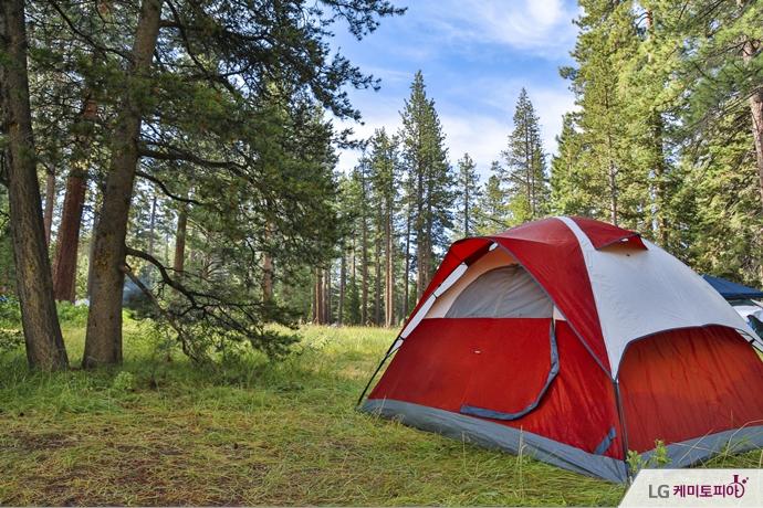 숲 속의 붉은 색 텐트
