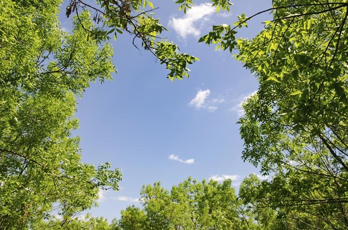 나뭇가지가 우거진 풀숲에서 올려다 본 하늘 사진