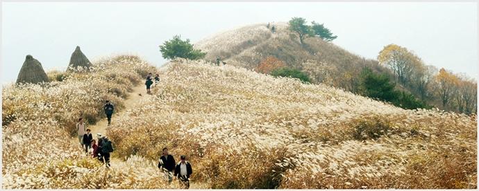 민둥산 억새밭 전경ⓒ정선민둥산억새축제 홈페이지