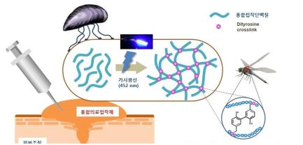 홍합 의료 접착제 원리