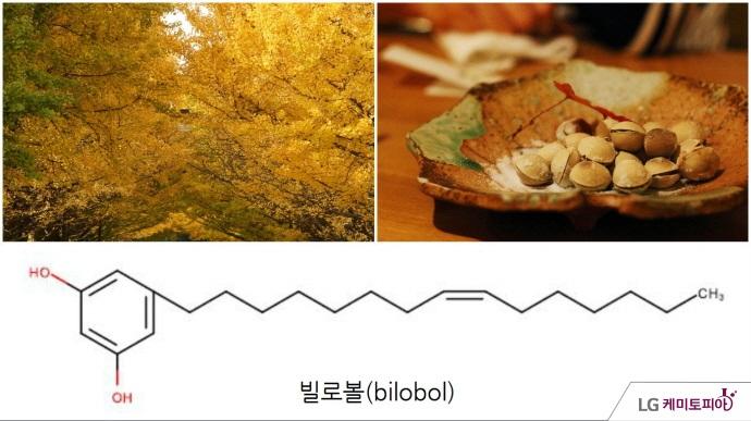 은행나무, 은행, 빌로볼 화학식