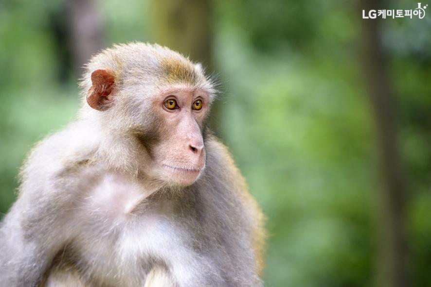 숲속의 원숭이 사진