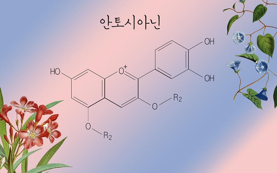 안토시아닌의 화학 구조