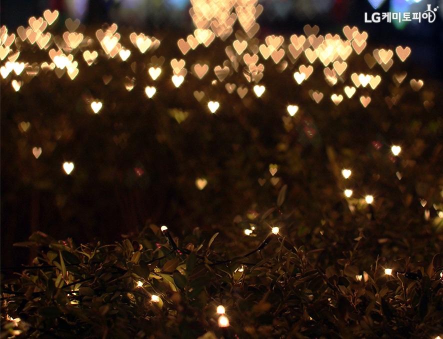 풀숲 너머 전구 조명이 하트 모양으로 빛나고 있는 사진