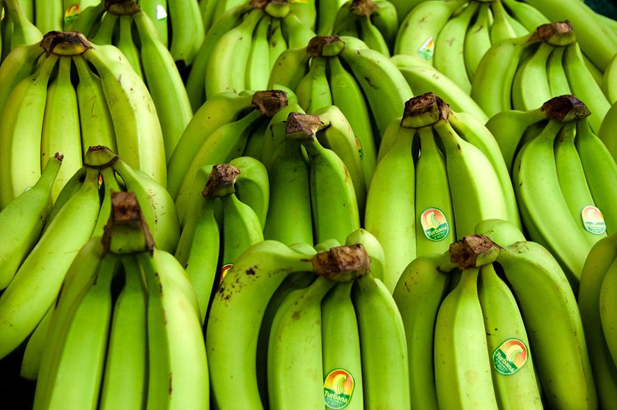 푸른 빛이 도는 바나나 다발들이 진열되어 있다