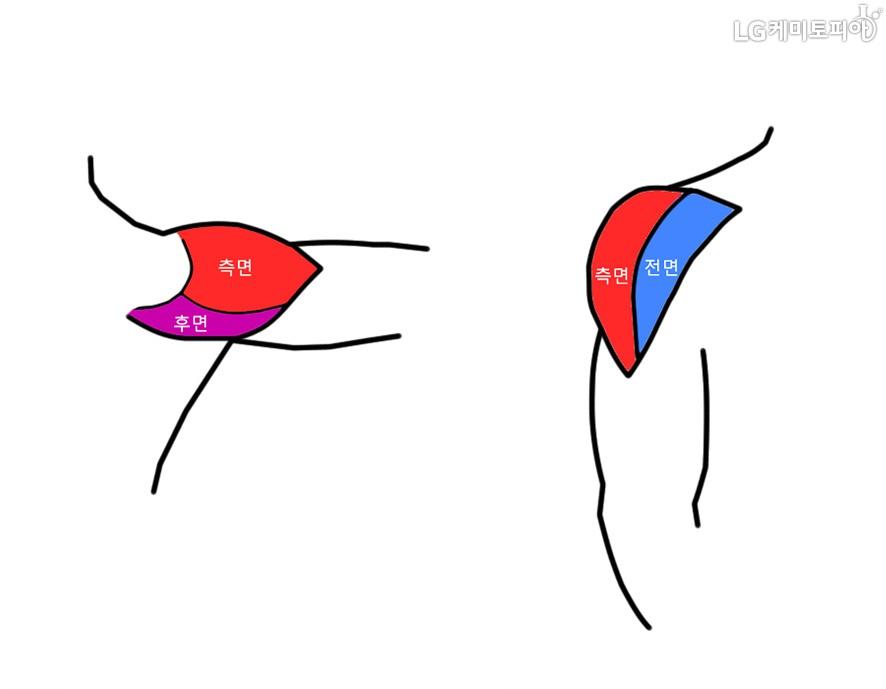어깨의 삼각근을 만화로 그린 그림. 어깨근육의 측면과 후면, 전면과 측면을 보여주고 있다.