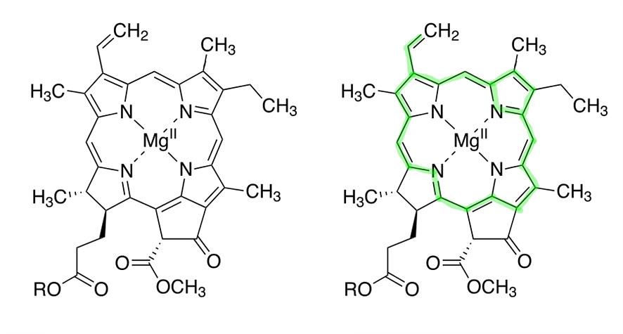 엽록소의 화학 구조