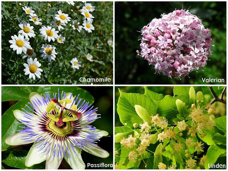 slow cow에 있는 허브추출물 꽃 소개. 왼쪽위부터 카모마일, 발레리안, 파시플로라, 린덴