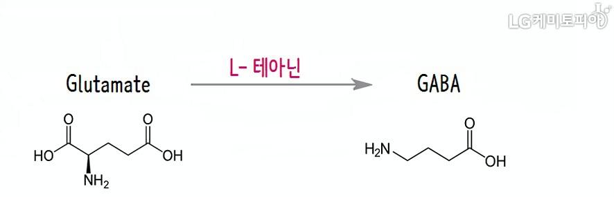 글루탐산이 L-테아닌을 통해 GABA로 전환, 뇌세포 안정 효과를 얻는 과정