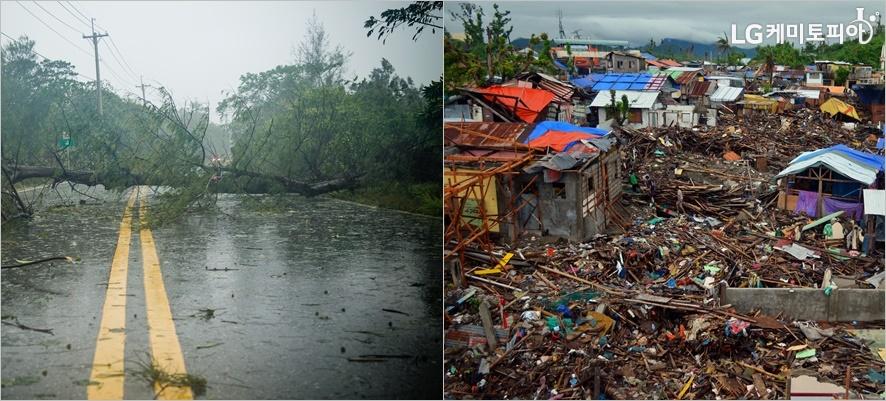 태풍으로 쓰러진 나무와 붕괴된 가옥들