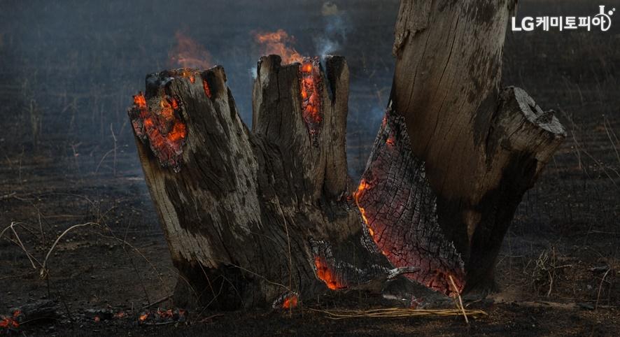 떨어지는 낙뢰를 맞아 불타버린 나무들