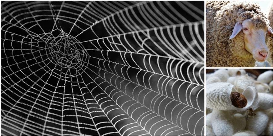 왼쪽에는 거미줄 확대 사진이, 우측상단에는 양털, 우측하단에는 누에 사진이 있다.