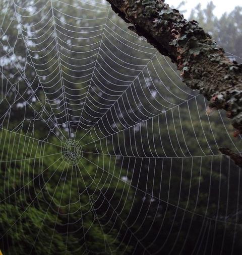나무 사이에 촘촘하게 걸린 거미줄