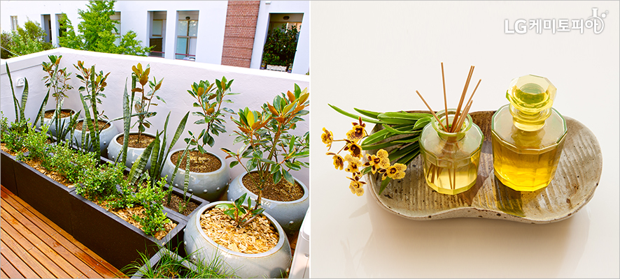 (좌)건물 옥상의 가드닝에 여러 개의 화분이 있다.(우)조화디퓨저와 아로마오일이 접시에 놓여있다.