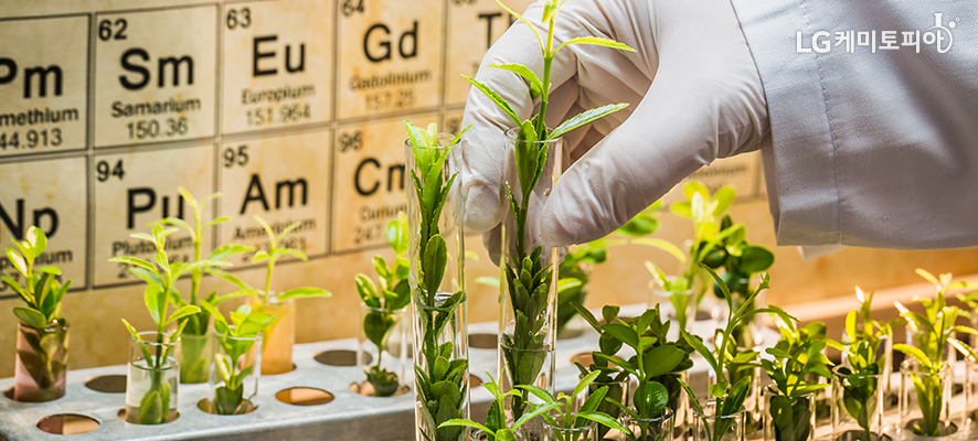 실험용 흰고무 장갑을 낀 손으로 실험용 비커에 꽂혀있는 푸른색 식물을 만지고 있다.