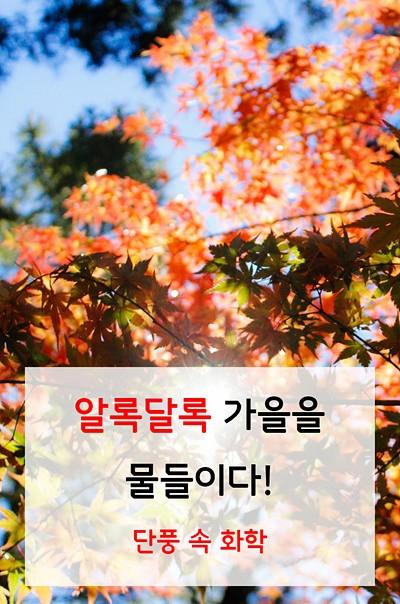 알록달록 가을을 물들이다! 단풍 속 화학