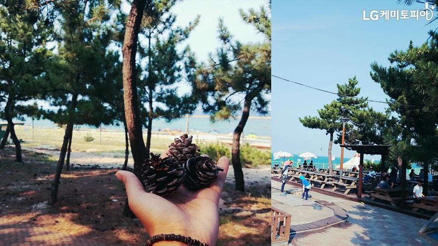 (좌)소나무 숲길에서 손 위에 솔방울 3개를 들고 있다. (우)소나무와 바다가 보이는 길