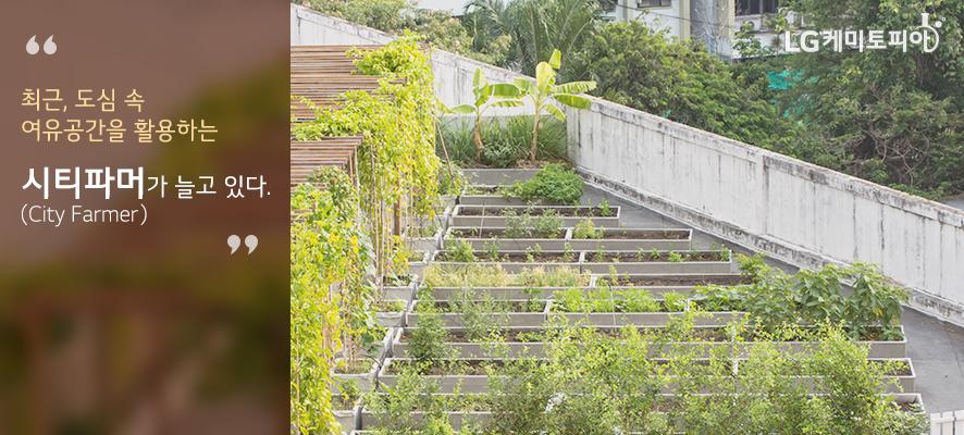 최근, 도심 속 여유공간을 활용하는 시티파머(City Farmer)가 늘고 있다. 도심 속 건물 옥상의 작은 텃밭.
