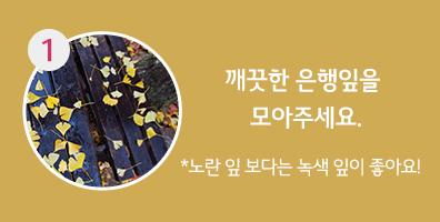 1. 깨끗한 은행잎을 모아주세요. *노란 잎 보다는 녹색 잎이 좋아요!