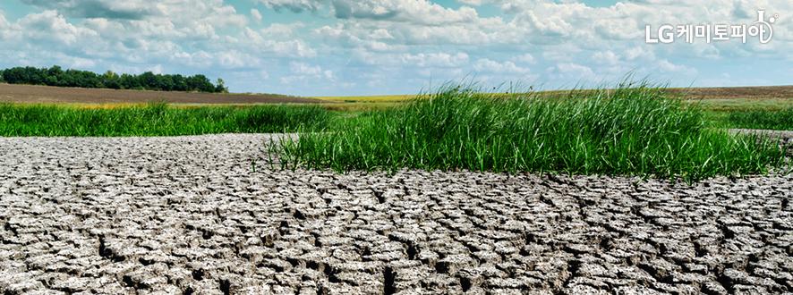 가뭄으로 논바닥이 다 말라서 갈라져있다.