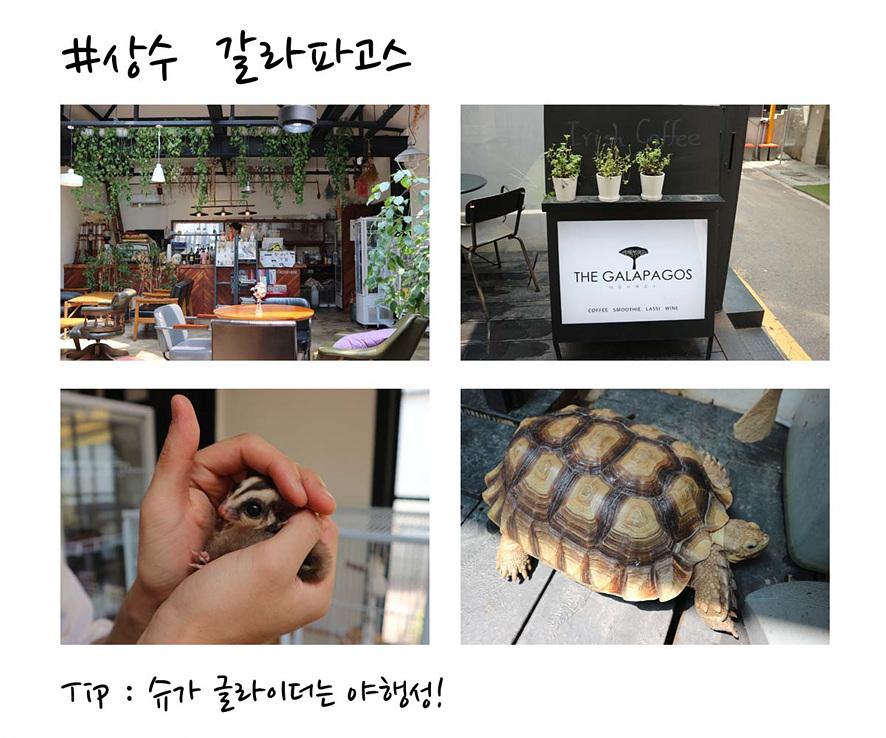상수 갈라파고스(Tip: 슈가 글라이더는 야행성!): 상수 갈라파고스 카페 내부 전경과 카페에 상주중인 슈가 글라이더와 거북이 사진