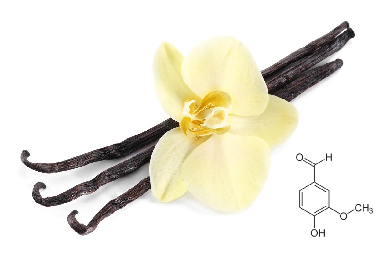 바닐라 꽃과 화학원소 모형도