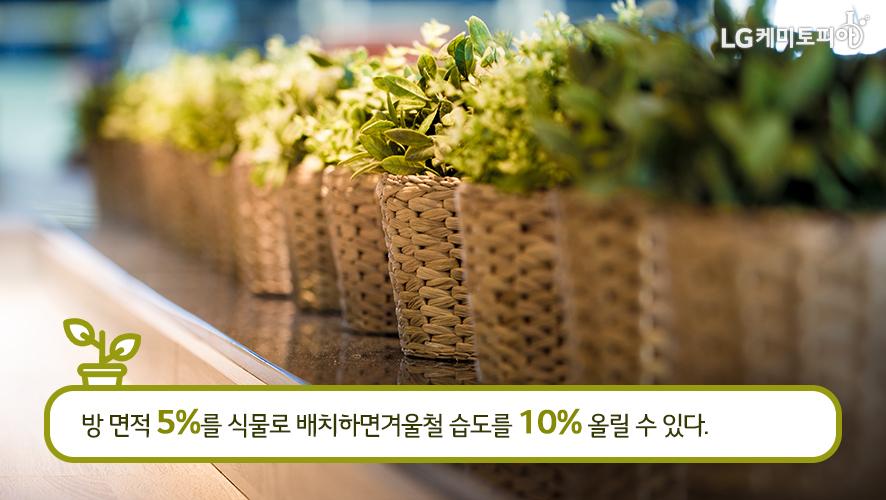 방 면적 5%를 식물로 배치하면 겨울철 습도를 10% 올릴 수 있다.