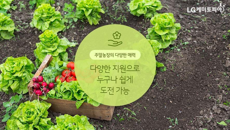 주말 농장의 다양한 매력: 다양한 지원으로 누구나 쉽게 도전 가능