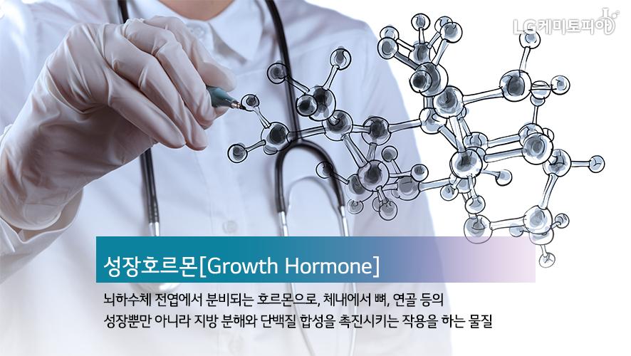 성장호르몬[Growth Hormone] 뇌하수체 전엽에서 분비되는 호르몬으로, 체내에서 뼈, 연골 등의 성장뿐만 아니라 지방 분해와 단백질 합성을 촉진시키는 작용을 하는 물질