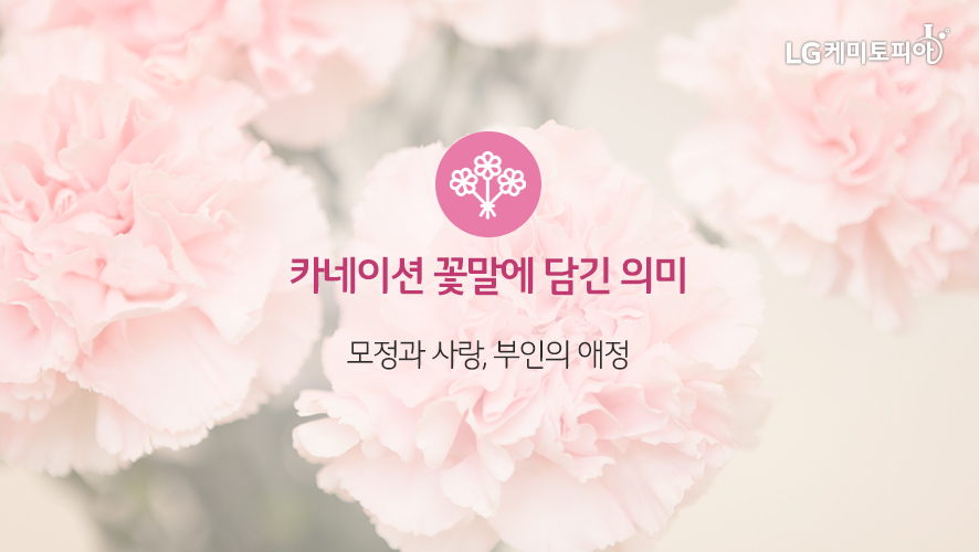 카네이션 꽃말에 담긴 의미: : 모정과 사랑, 부인의 애정