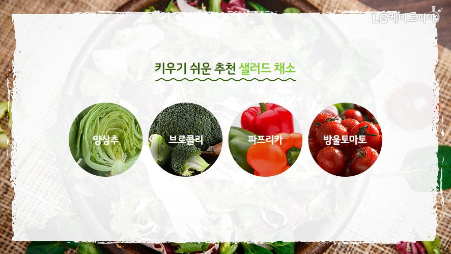 키우기 쉬운 추천 샐러드 채소. 양상추, 브로콜리, 파프리카, 방울 토마토