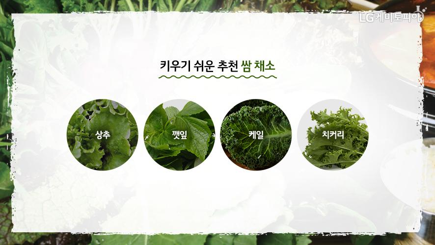 키우기 쉬운 추천 쌈 채소. 상추, 깻잎, 케일, 치커리