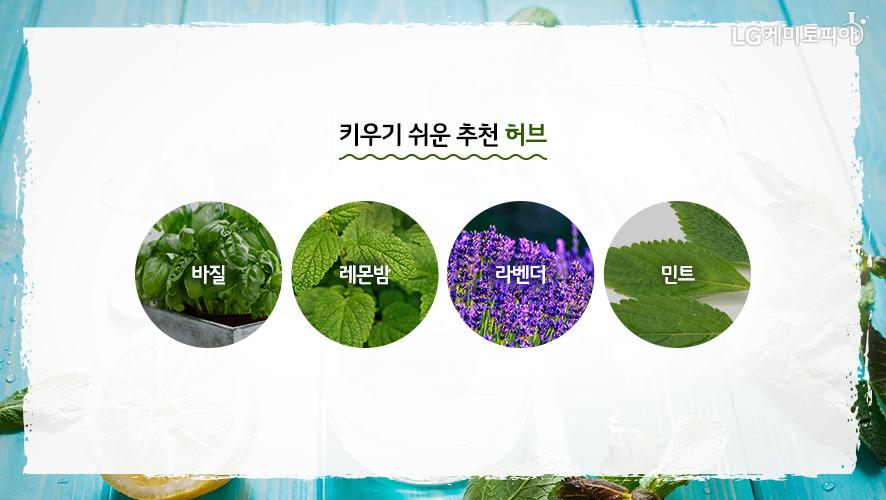 키우기 쉬운 추천 허브. 바질, 레몬밤, 라벤더, 민트