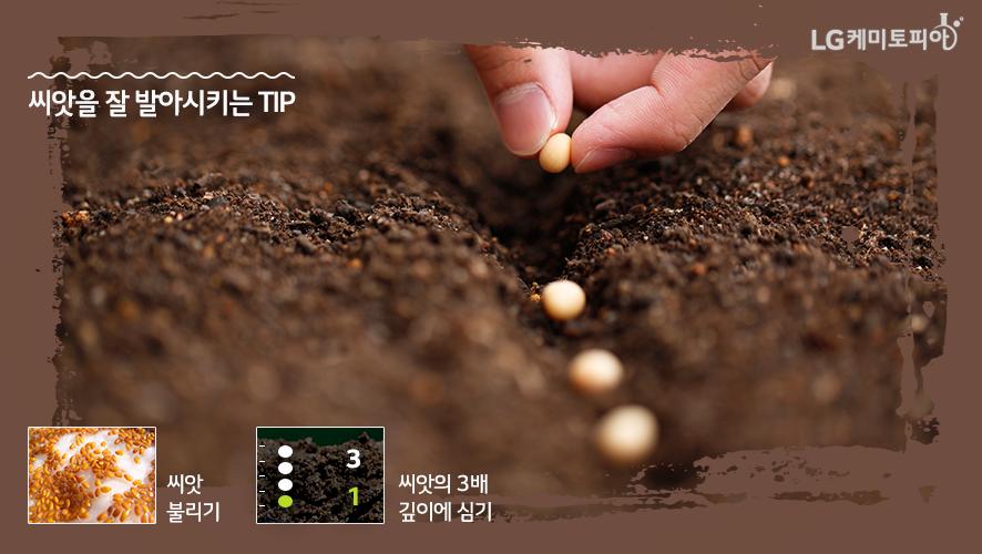 씨앗을 잘 발아시키는 Tip-1.씨앗 불리기,2.씨앗의 3배 깊이에 심기