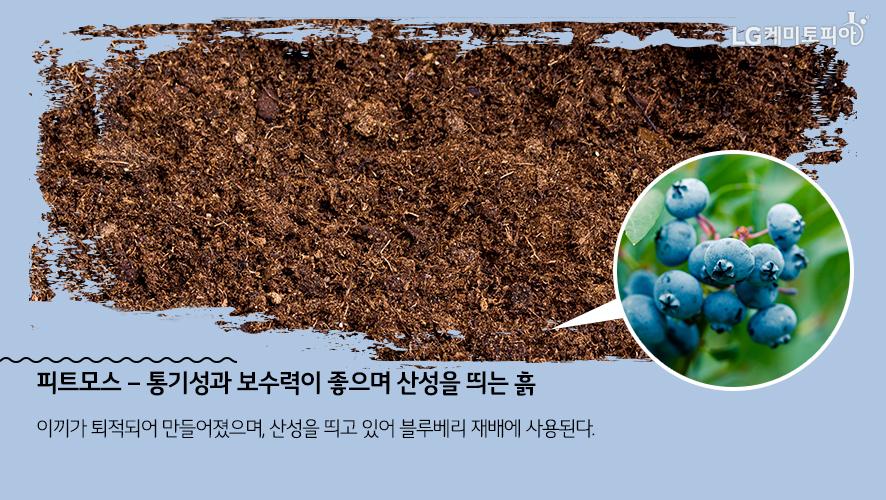 피트모스 – 통기성과 보수력이 좋으며 산성을 띄는 흙: 이끼가 퇴적되어 만들어졌으며, 산성을 띄고 있어 블루베리 재배에 사용된다.