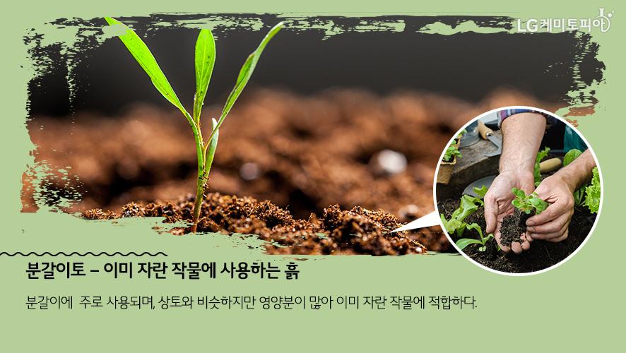 분갈이토 – 이미 자란 작물에 사용하는 흙: 분갈이에 주로 사용되며, 상토와 비슷하지만 영양분이 많아 이미 자란 작물에 적합하다.