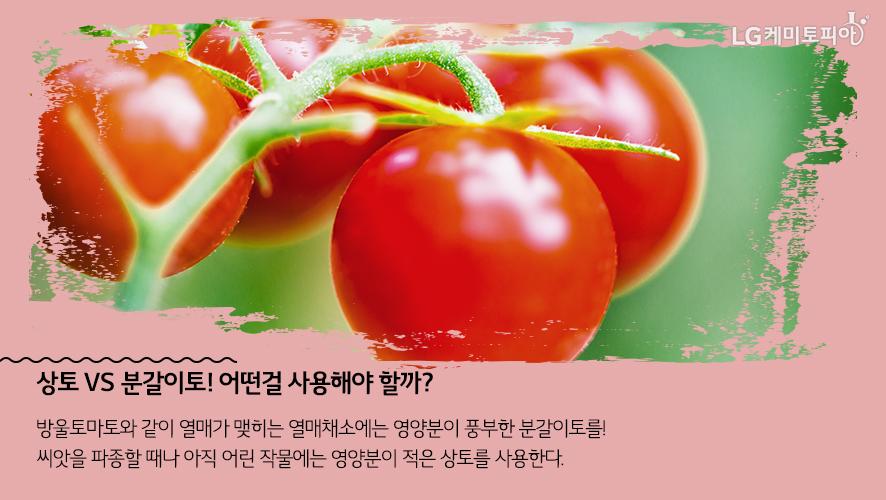 상토 VS 분갈이토! 어떤걸 사용해야 할까? 방울토마토와 같이 열매가 맺히는 열매채소에는 영양분이 풍부한 분갈이토를! 씨앗을 파종할 때나 아직 어린 작물에는 영양분이 적은 상토를 사용한다.