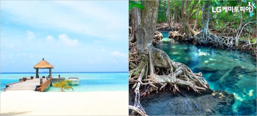 (왼쪽부터) 무레아 섬의 블루 라군 바다, 랑카위 맹그로프 숲 풍경