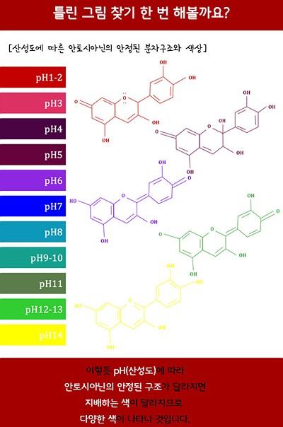 틀린 그림 찾기 한 번 해볼까요?(산성도에 따른 안토시아닌의 안정된 분자구조와 색상) 이렇듯 ph(산성도)에 따라 안토시아닌의 안정된 구조가 달라지면 지배하는 색이 달라지므로 다양한 색이 나타나는 것입니다.