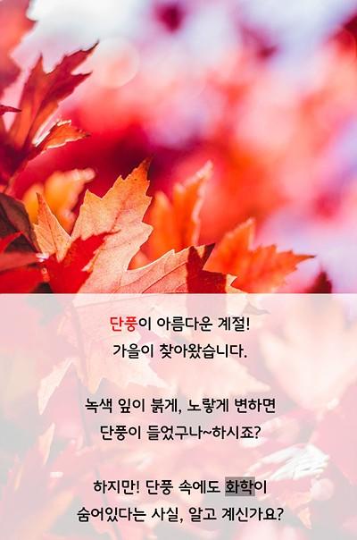 단풍이 아름다운 계절! 가을이 찾아왔습니다. 녹색 잎이 붉게, 노랗게 변하면 단풍이 들었구나~하시죠? 하지만! 단풍 속에도 화학이 숨어있다는 사실, 알고 계신가요?