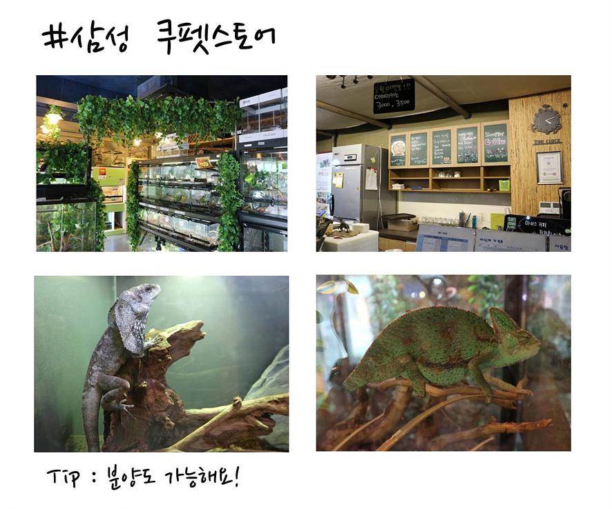 삼성 쿠펫스토어(Tip: 분양도 가능해요!): 삼성 쿠펫스토어 카페 내부 전경과 이구아나를 포함한 파충류 사진